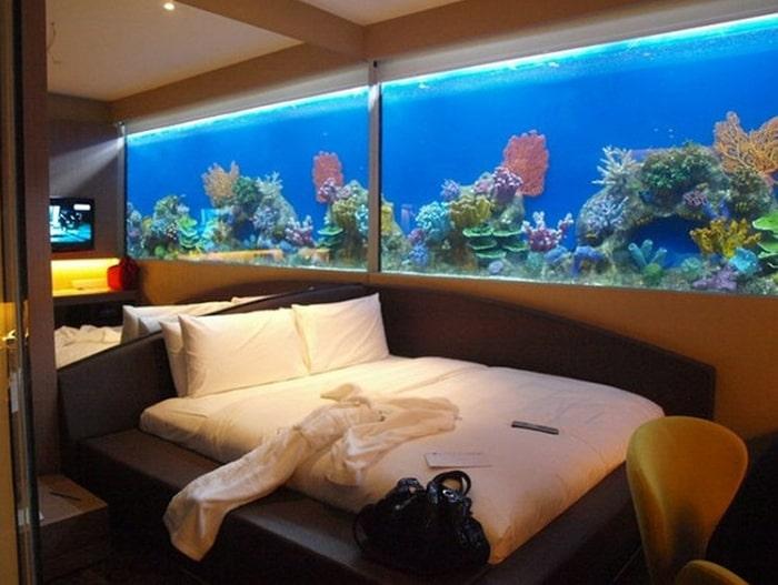 Có nhiều người cho rằng bể cá không nên đặt trong phòng ngủ