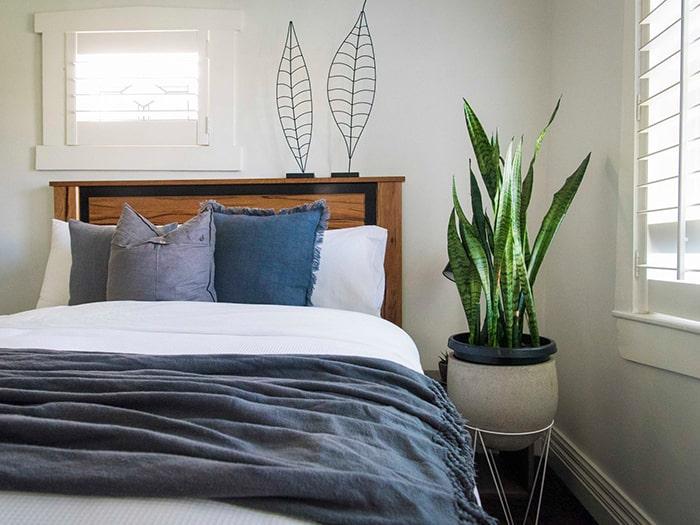 Cây lưỡi hổ có tác dụng thanh lọc không khí bên trong phòng ngủ